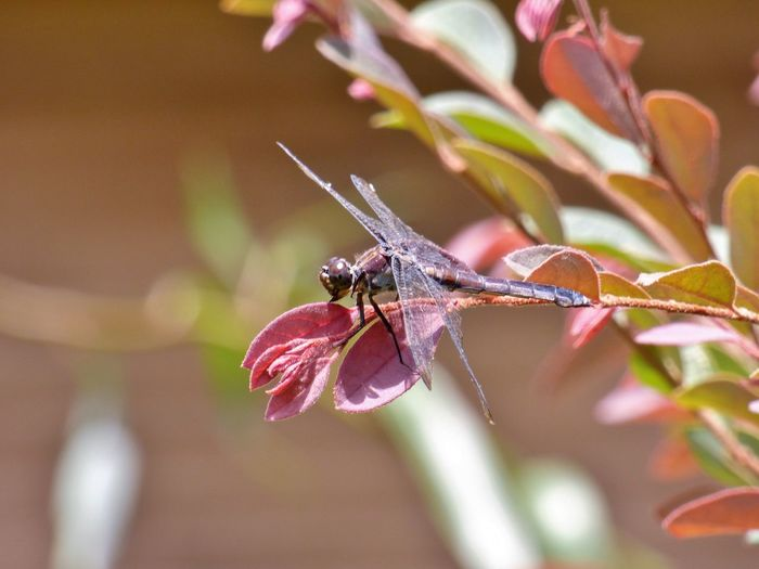 Close-up of dragonfly on plant growing outdoors