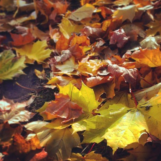 Suzdal autumn 64 Суздаль Осень