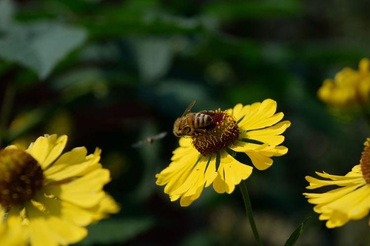 Biene Biene Bee