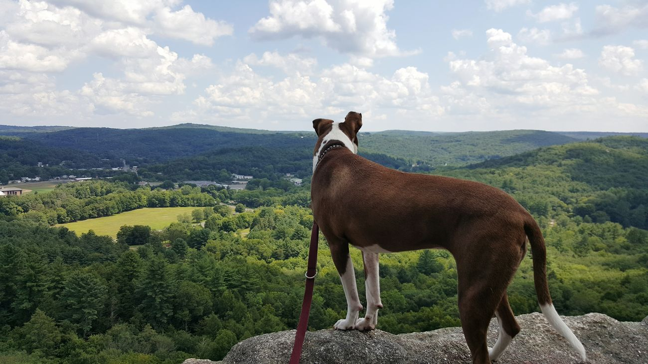 Summer Dogs On Top Of The World
