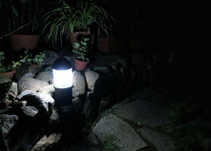 Nightlamp Gardenlight Garden Gardenphotography Tree Plant