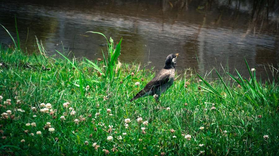 Bird Puddle Bush カメラ担いで淀川サイクリング