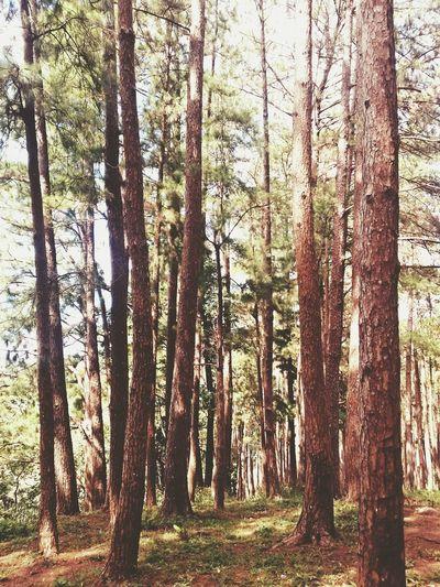 At the summer capital of Iloilo. Hugging A Tree Tree Porn Treescollection ExploreIloilo SharePH