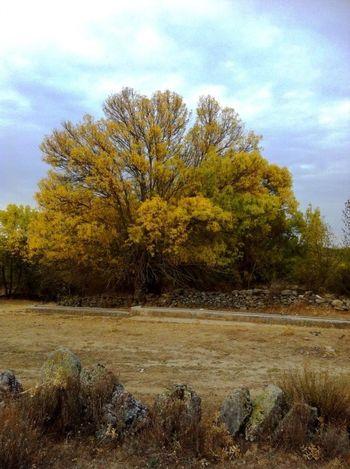 El Cubillo Segovia Pueblos De España Otoño Colors Of Autumn Nature Fotography