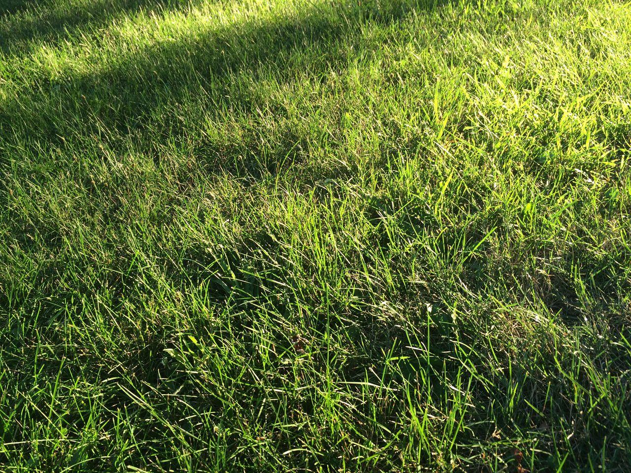 DETAIL SHOT OF GREEN GRASSY FIELD