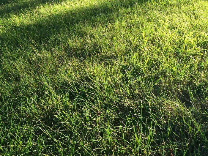 Detail shot of grassy field