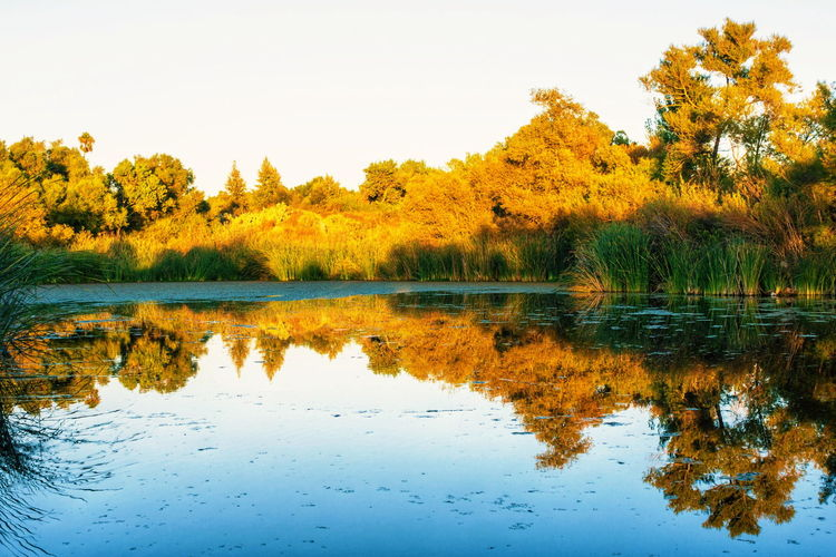 Reflection Tree Water Lake Nature Scenics Outdoors Sky Tranquil Scene Beauty In Nature No People Symmetry Day