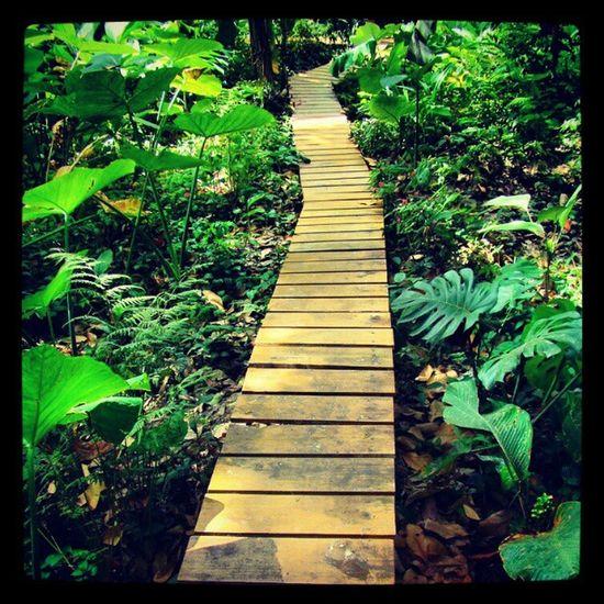 Path Nature Parquelage Riodejaneiro