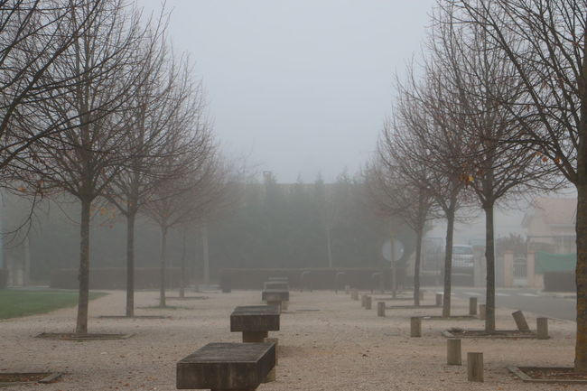 Cold Temperature Composition Fog Foggy Perspective Solitude The Way Forward Weather Showcase: November