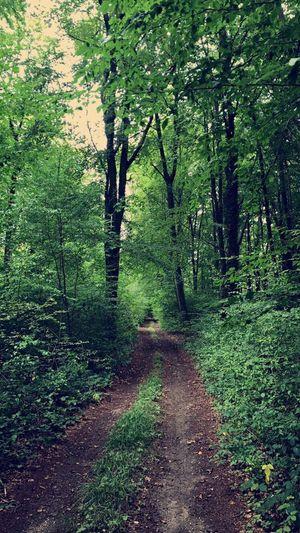Petite Balade dans les bois , Lassigny Oise  Picardie Hautsdefrance Forest Tree Tranquility
