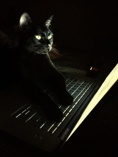 Cat Cybercat
