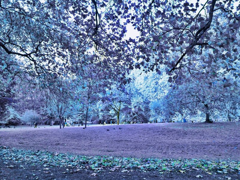 Color Infrared Infrared Park Hello World