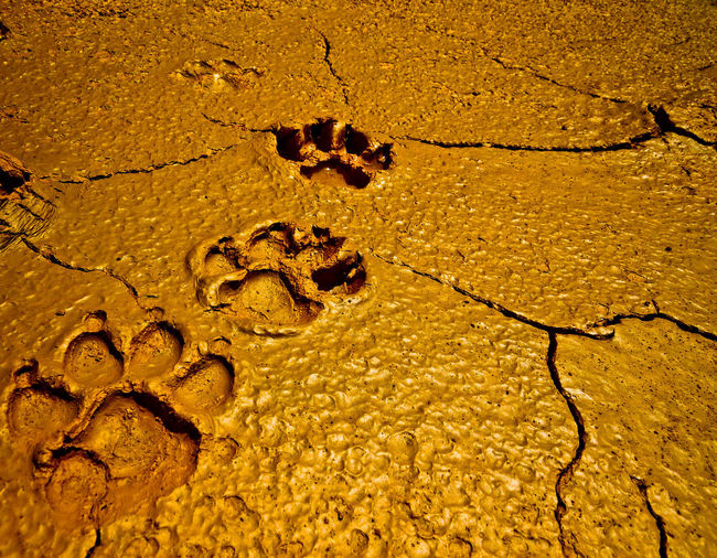 Close-up of paw prints on wet sand