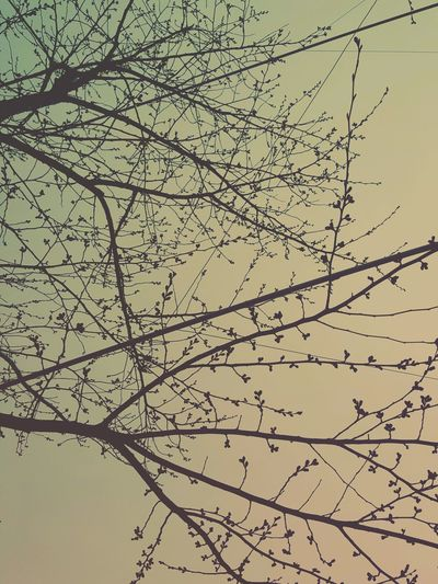 Before blossom First Eyeem Photo