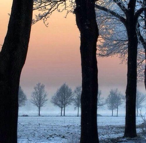 Tree Nature Beautiful Smog Winter