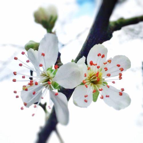 Zarte Blüten Blütenschönheit Frühlingserwachen Springtime EyeEm Nature Lover EyeEm Best Shots EyeEm Deutschland Tadaa Community Daswasichsehe😊