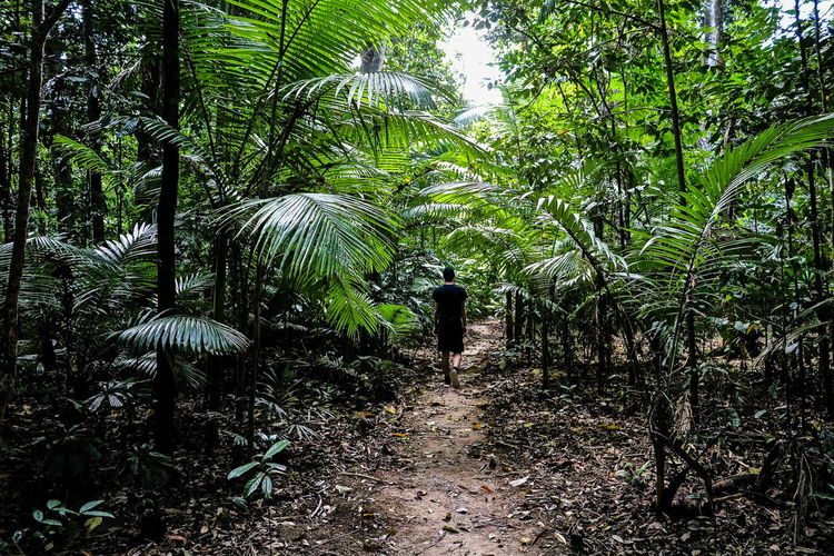 Beauty In Nature Forest Green Growth Nature Rainforest Rainforest Australia Rainforest Walks Tree