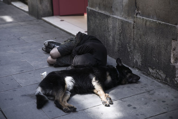 High angle view of male beggar lying with dog on footpath
