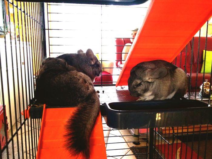 Pets Dog Cage