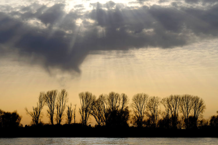 The riverside of the rhine Bare Tree Beauty In Nature Cloud - Sky Day Idyllic Landscape Nature No People Outdoors Scenics Silhouette Sky Sunlight Sunset Tranquil Scene Tranquility Tree Water FUJIFILM X-T2 Fujifilm_xseries