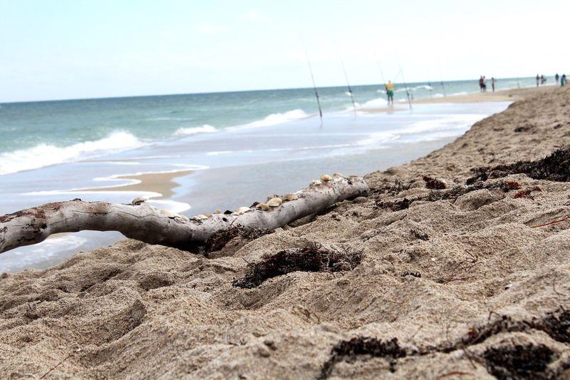 The KIOMI Collection Edit Sandy Beach Rocks Shells