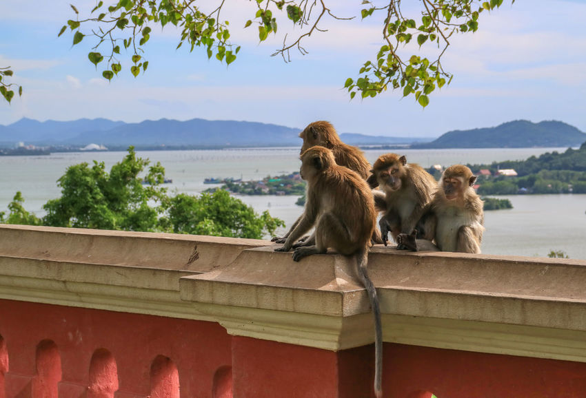 Monkeys Songkhla Thailand Khao Tang Kuan Monkeys Sitting Animal Wildlife Animal Water Animals In The Wild No People Outdoors Tree Sky Travel Destinations Mammal Nature Sea Day