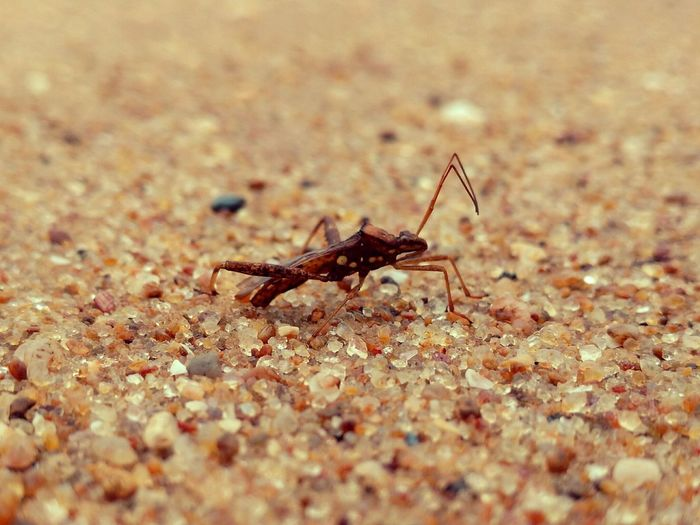 Insects  Insect Photography Sea And Life Sea Creatures Insect And Sand Macro Of Insect, Close-up Of Insect