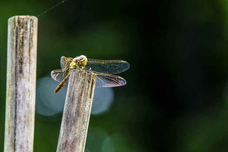Close-up of dragonfly on wood