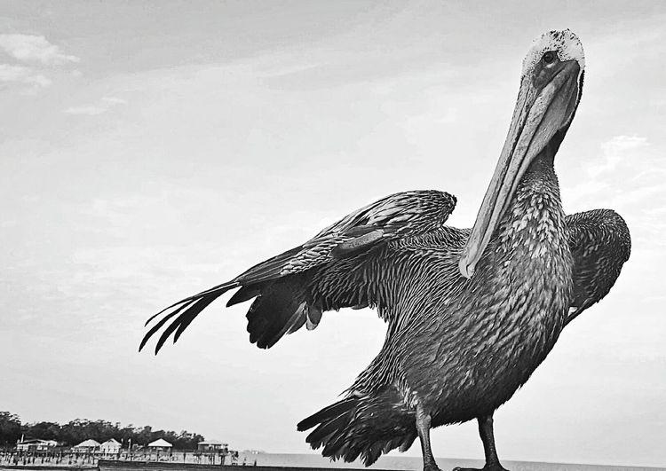 Mobile Bay Fairhope  Pelican Bay Breeze