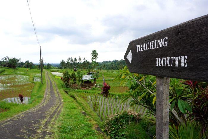 Walking Trail Trekking Walking Path Signboard Rural Scene Indonesia_photography