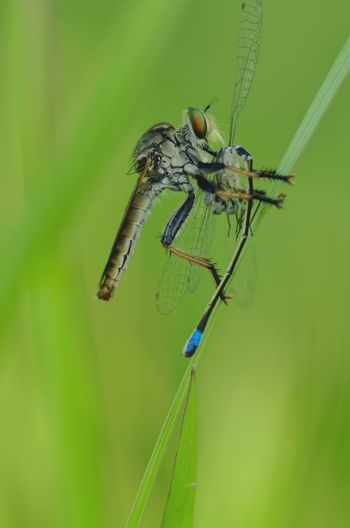 Close-up of dragonfly on plant against blurred background