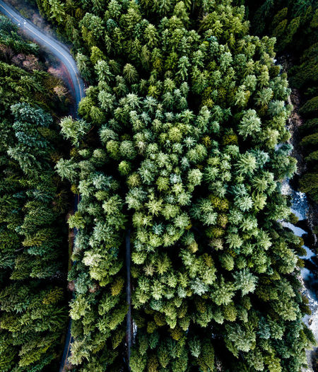 cut through Road Backgrounds Close-up Day Forest Freshness Green Color Growth Indoors  Nature No People Plant Tree