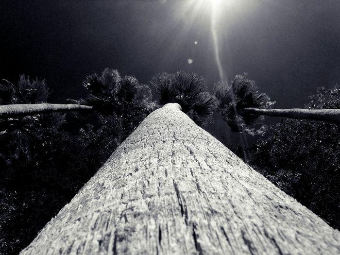Palm Trees Palm Tree Palm Tree Silhouette Trees Treescollection Trees And Sky Trees Collection Trees Silhouettes Trees And Sun Nature's Diversities Natures Diversities Check This Out Nature Photography Nature_collection Beautiful Nature