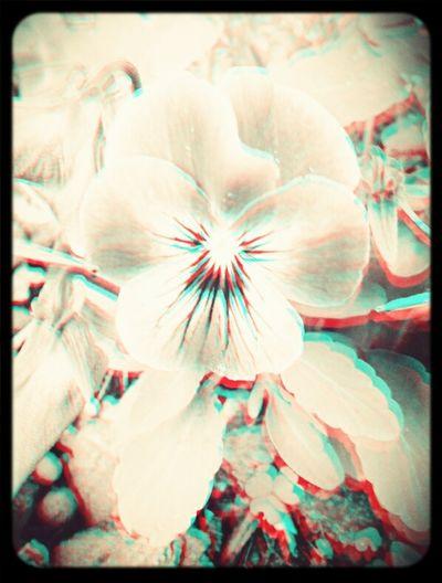 A little 3D flower...for the start
