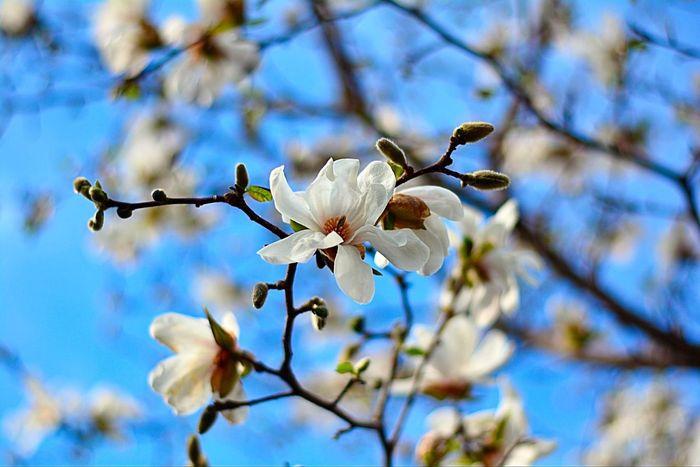 Spring is in the air City Tree TreePorn Budding Tree Colour NikonD7100 Nikon D7100 Toronto