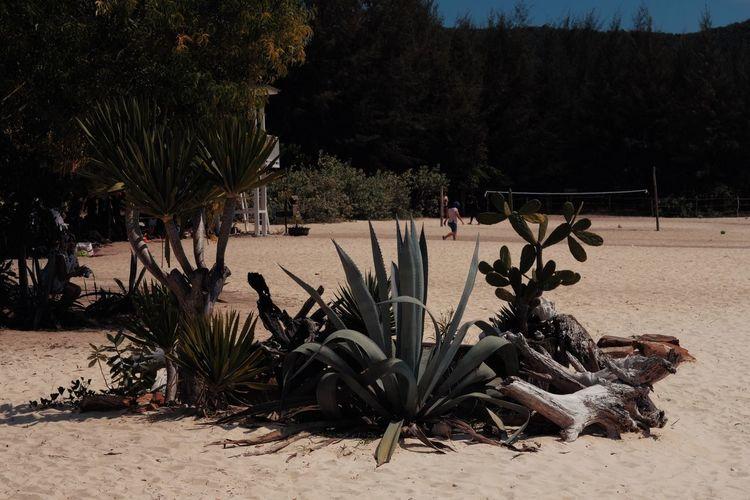 Plants on beach