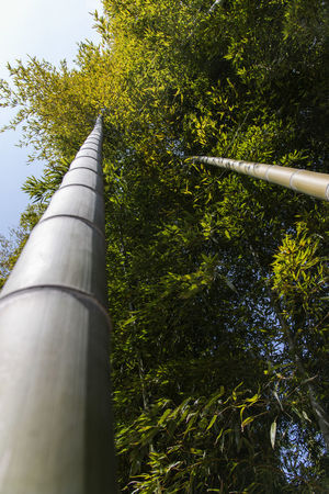 bamboo forest at Gwangyang Cheongmaesil Maeul in Jeonnam, South Korea Bamboo Gwangyang Plant Tree Nature Day Growth Outdoors Low Angle View No People Architecture Green Color Sky Built Structure Tall - High Pipe - Tube Pipe Sunlight Industry Water Pipe Building Exterior Clear Sky Bamboo - Plant
