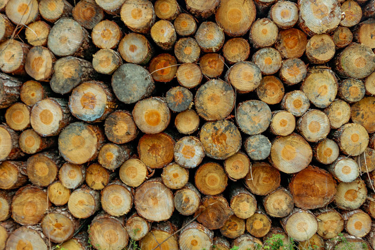 Timber Stack Log Firewood Woodpile Forestry Industry Heap Wood - Material Repetition Large Group Of Objects Backgrounds Abundance Full Frame Lumber Industry Close-up Day Industry No People Outdoors EyeEm Best Shots EyeEmNewHere