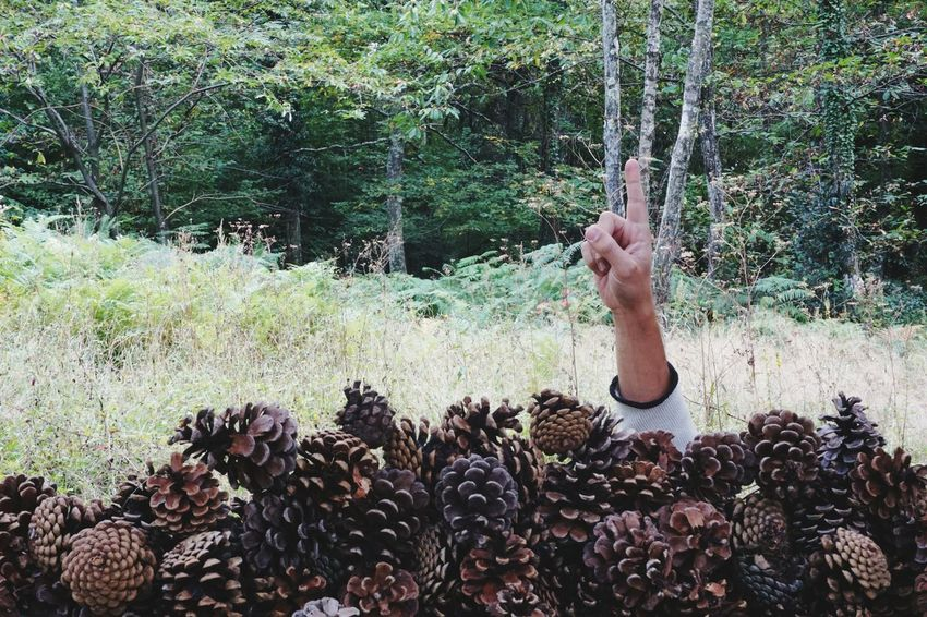 One Person Human Hand Real People Help Outdoors Body Part Business Life Eyeemphotography Autumn EyeEmBestPics EyeEmMagazine Eyeemmarket Seasonal EyeEm Nature Lover Too Much On My Mind Too Much Information Too Much Work Too Many Too Much Submerged Submerge Busy Sort Pine Cone