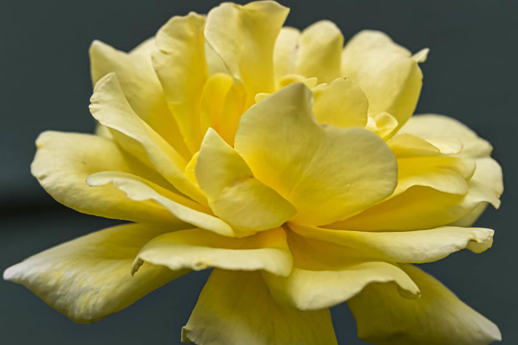 A bright yellow