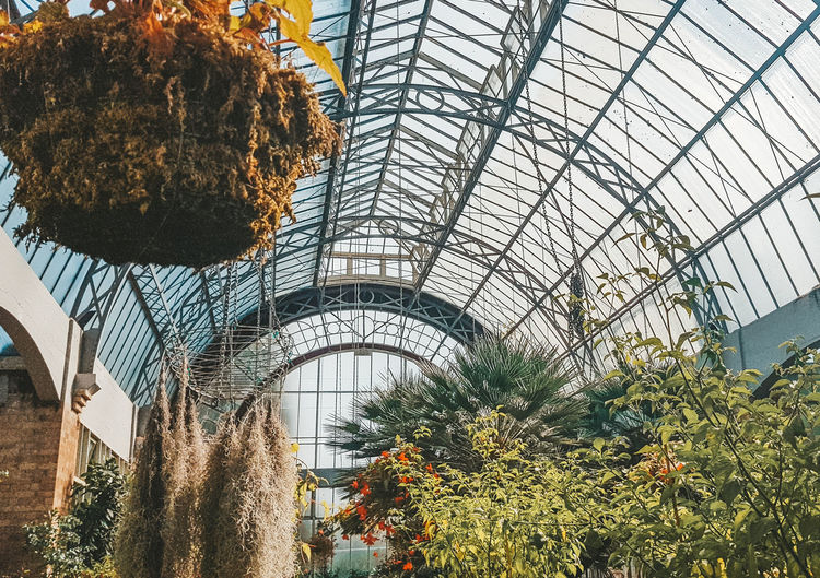 Orangerie Plant Growth Greenhouse Indoors  Nature Architecture No People Built Structure Day Tree Flowering Plant Botany Flower Beauty In Nature Ceiling Plant Nursery Low Angle View Sunlight Freshness Orangerie