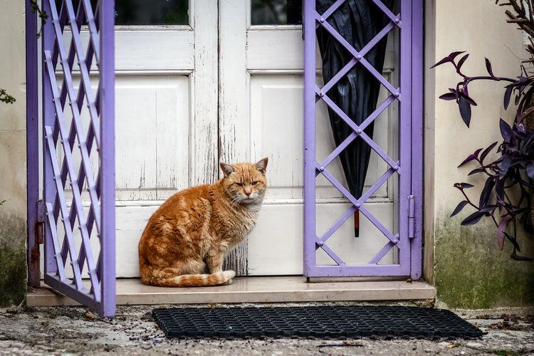 Waiting Lecce Cat Domestic Animals Pet Gate Pets Domestic Feline Domestic Cat No People Door Sitting