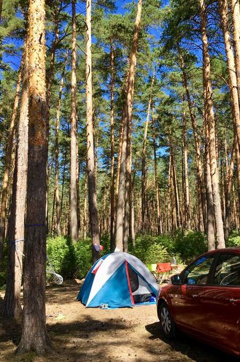 🏕☀️ EyeEm Nature Lover Russia EyeEm Gallery EyeEmNewHere ока ступино Tree Plant Tent Land Nature Camping Trunk Day Sunlight Forest No People Beauty In Nature Outdoors