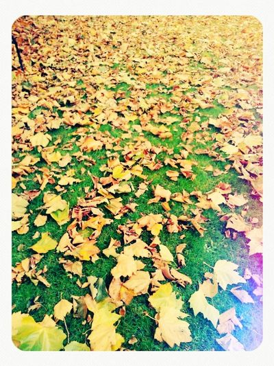 Autumn Colors Of Autumn autunno Autumn Leaves