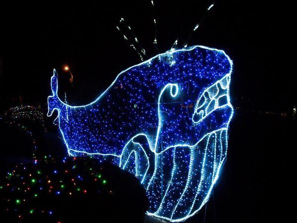 Yeosu Yeosu Cable Car Light Light Photography OlympusPEN Olympus E-P3 Zuiko 14-54mm II Olympus Photography Wintertime