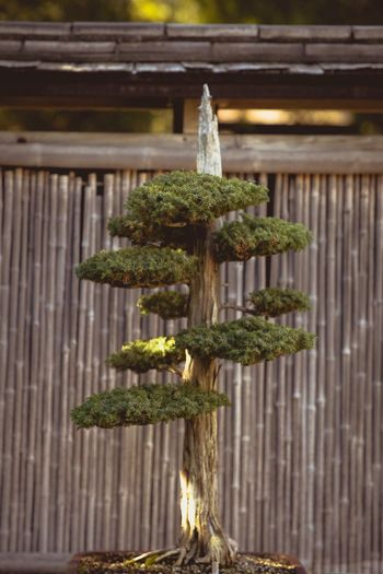 Green Color No People Plant Growth Day Close-up Outdoors Wood - Material Nature Corrugated Iron Tree Freshness Bonsai Tree