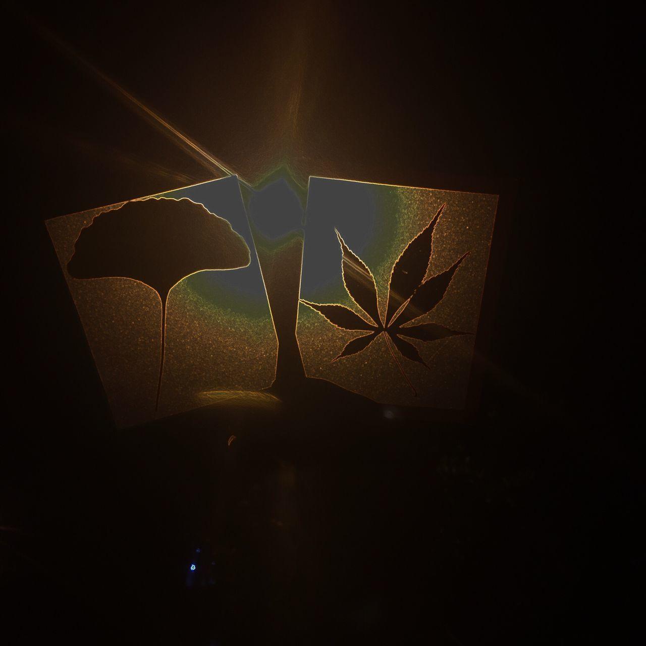 night, no people, leaf, indoors, illuminated, close-up, black background