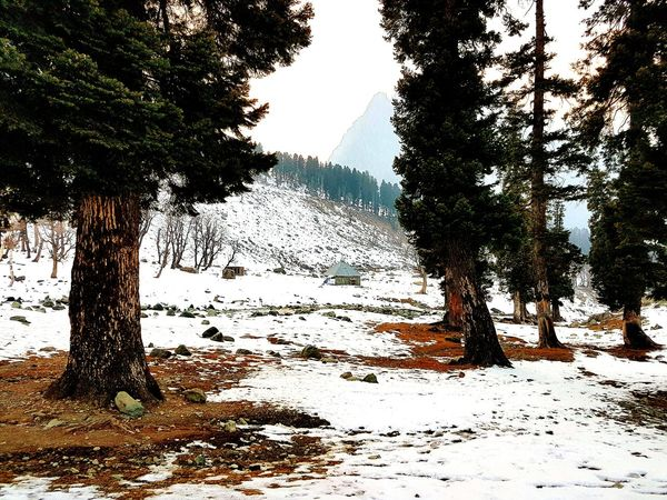 Tree Water Nature Sky No People Outdoors Beauty In Nature Scenics Day Close-up Beauty In Nature Nature Cold Temperature Pine Woodland Tree Trunk Tree Bark On Focus Towering Trees Snow Sports