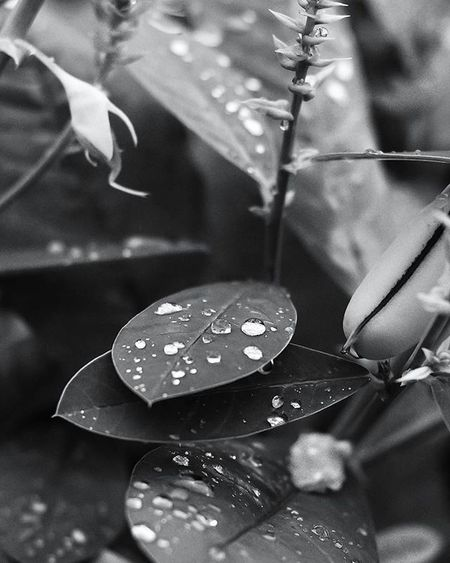 Grenada Ig_grenada Ilivewhereyouvacation Andyjohnsonphotography Nikon Photography Beautyeverywhere Uncoveryours Views Goldeneye Rural_love RuralGND PureGrenada Golden_click IshootGND Insta_noir Monochrome Droplets Naturallight