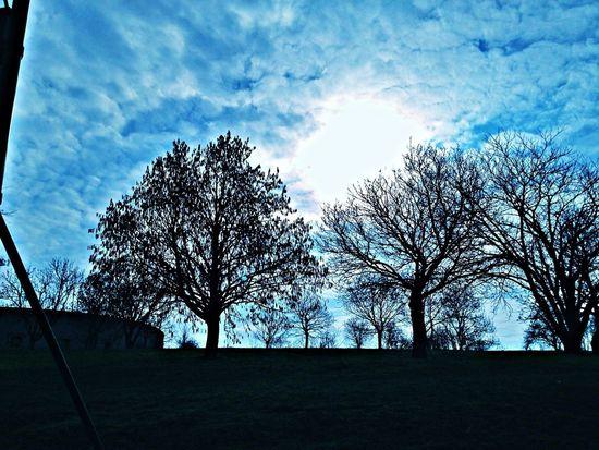 Skyblue Sunshine Trees
